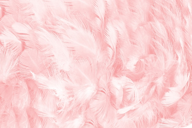 Coral pink feather texture background