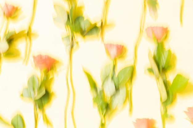 Coral red roses motion blur abstract background