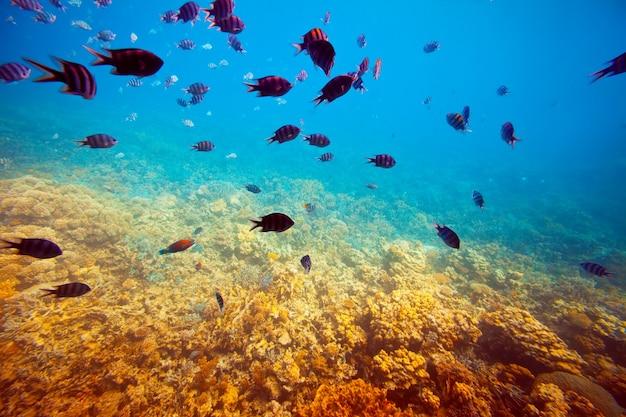 산호초 지역