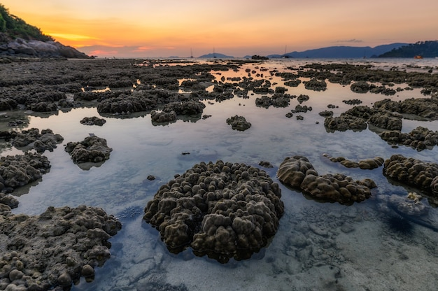 Coral reef on coastline in tide phenomenon at sunset