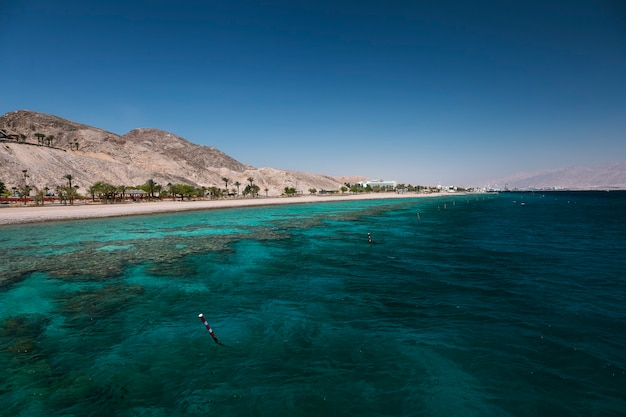 Coral reef in the gulf of eilat, red sea Premium Photo