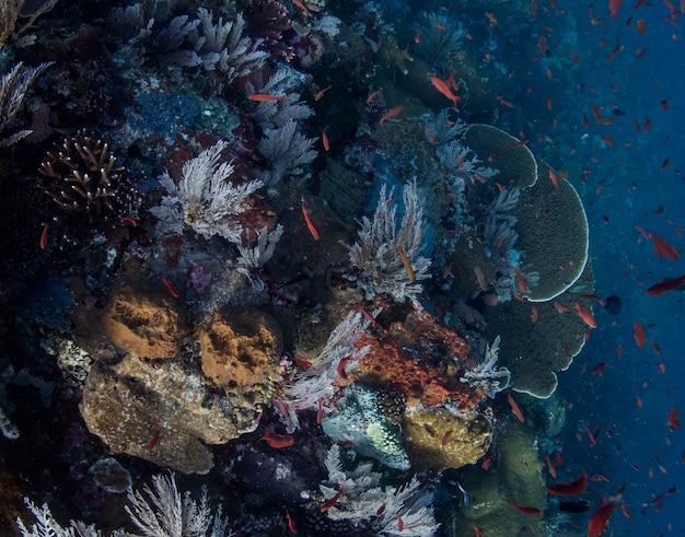 Коралловый риф на острове комодо