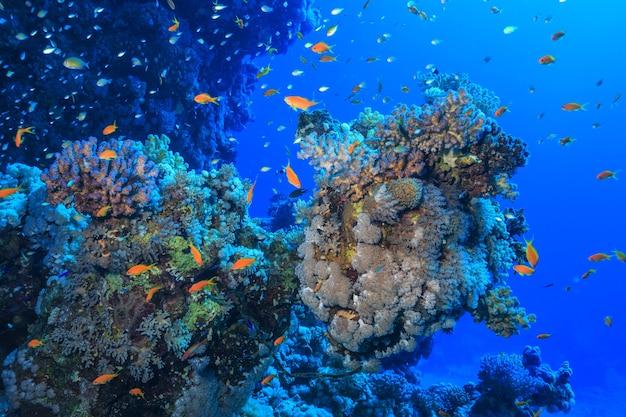 홍해의 산호초