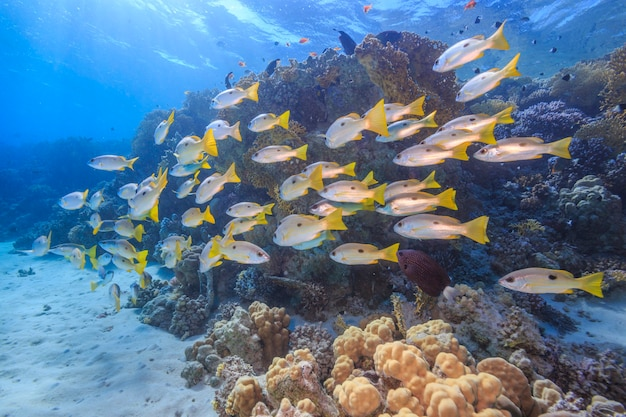 Coral reef red sea egypt