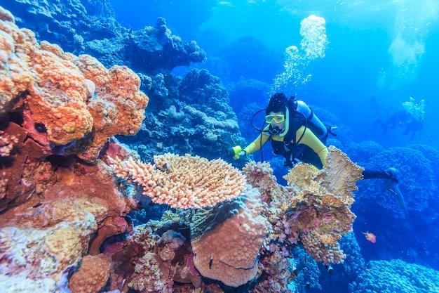 산호초 홍해 이집트