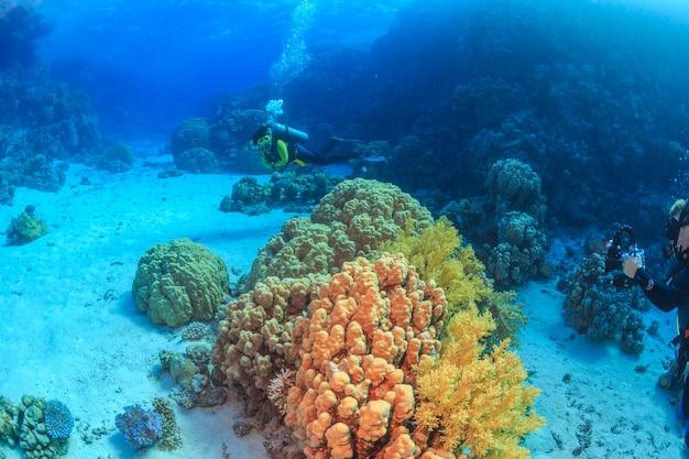 산호초 홍해 이집트 프리미엄 사진