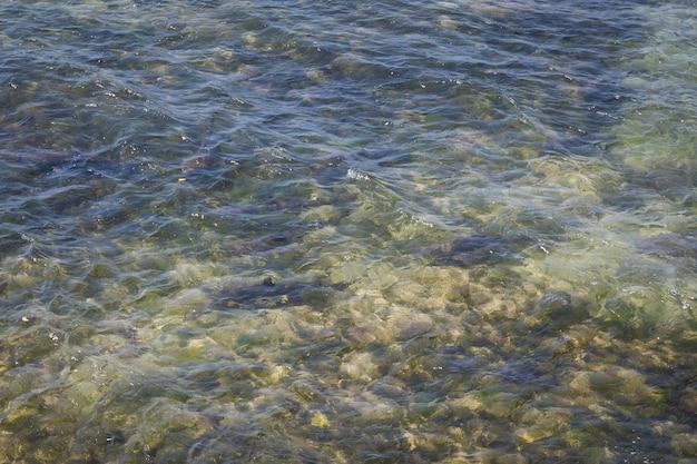 バリ島ヌサドゥアの海岸線近くのサンゴ礁のサメ