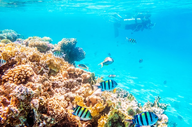 Coral reefs and fish underwater world