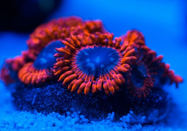 Corals in a marine aquarium.