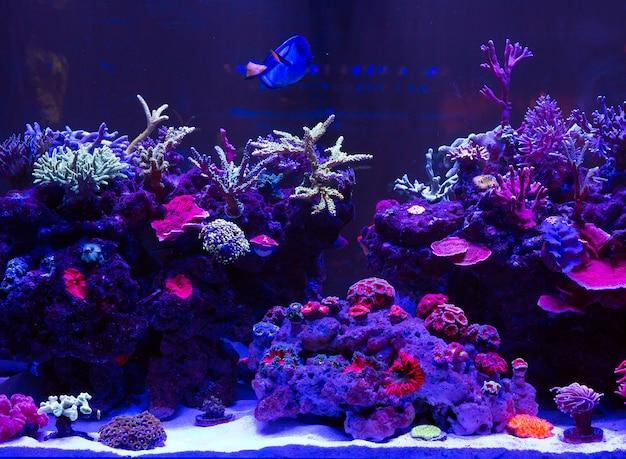 Corals in a marine aquarium.