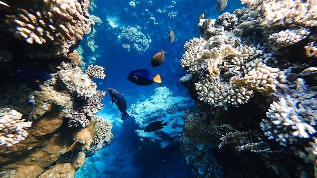 Кораллы красного моря под водой, освещенные солнечными лучами света.