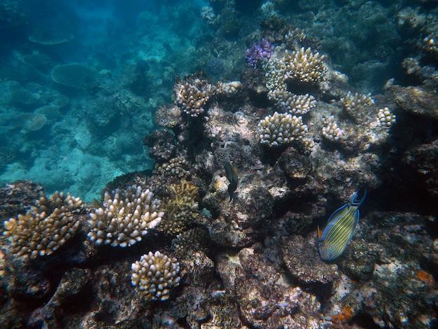 Кораллы под водой во время подводного плавания на большом барьерном рифе, австралия