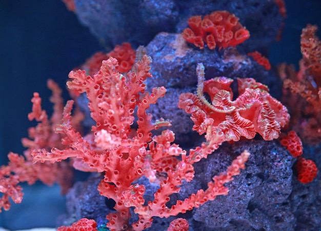 Кораллы с морским коньком в аквариуме