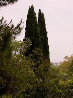 Corfu landscape