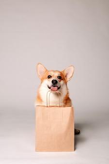 Corgi dog sits next to a crafting bag on a light wall