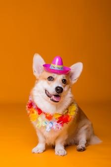 Corgi dog in sunglasses and hawaiian beads on yellow background
