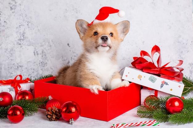 Щенок корги в шапке санта-клауса на новогоднем фоне с подарками