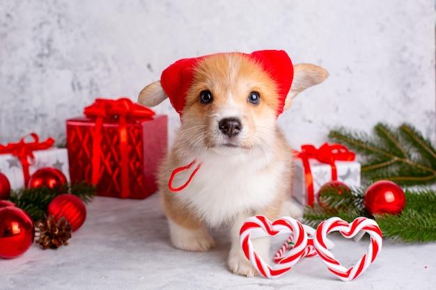 Corgi puppy on new year's background in a dwarf hat