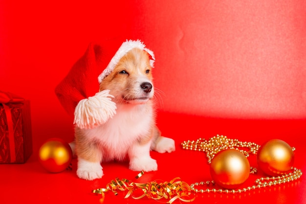 Corgi puppy in santa hat on red background christmas, new year