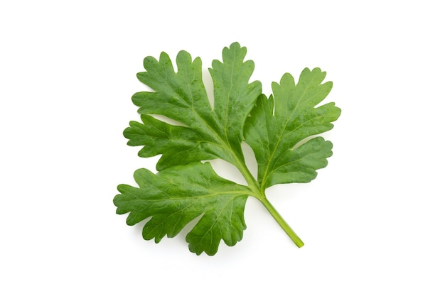 Coriander branc green leaves isolated on white background.