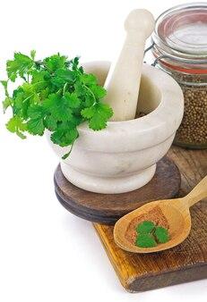 Кориандр свежая зелень кинза изолированные на белом