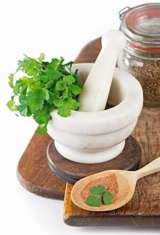 Кориандр свежая зелень кинза изолированные на белом.