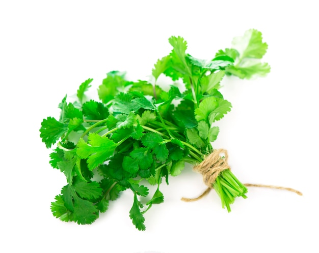Coriander fresh greens cilantroisolated on the white