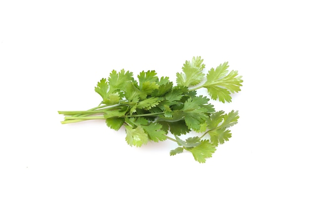 Coriander of ingredient vegetable isolated on white background for design in your work.