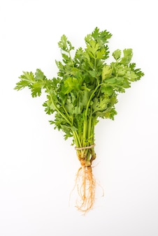 Coriander isolated