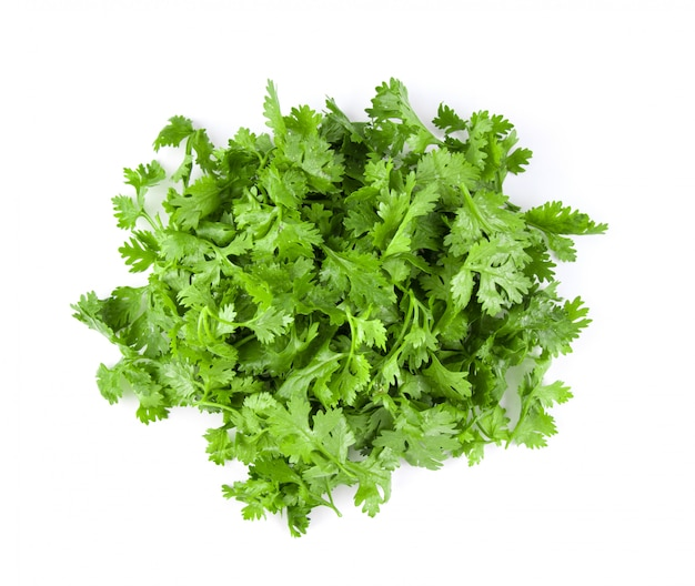 Coriander leaves on white wall.