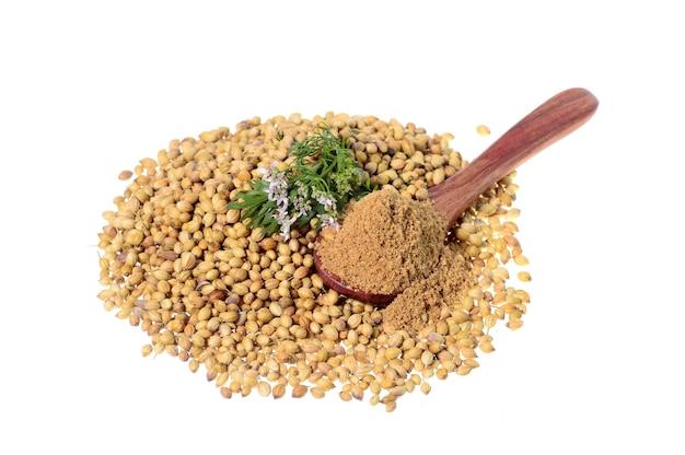 コリアンダーの種子、新鮮なコリアンダー、粉末コリアンダーが白い表面に分離されています。