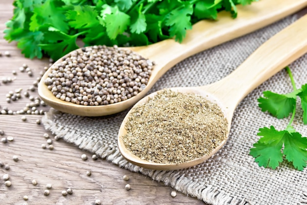 Coriander seeds and ground in two spoons on burlap, fresh cilantro on a wooden board background