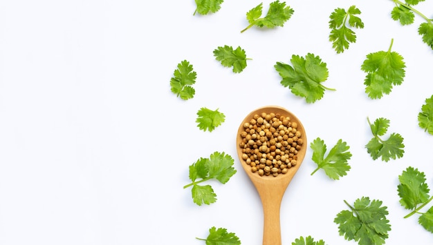 Coriander seeds with fresh leaves isolated on white