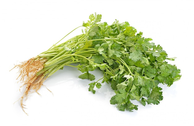 Coriander on white isolated