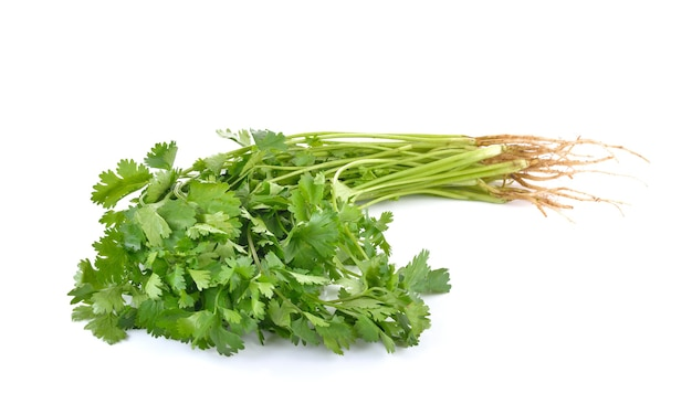 Coriander on white wall