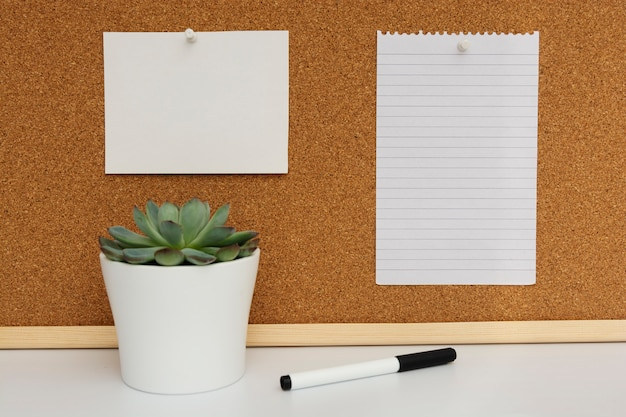 Cork board. live succulent plant. empty paper page for notes.