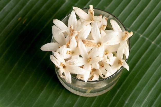 コルクの木またはバナナの緑の葉の上のmillingtoniahortensisの花