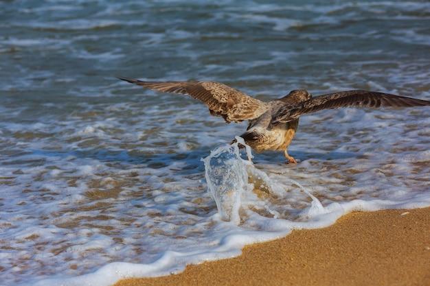 A cormorant fly over the ocean surface.