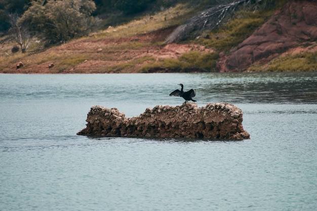 Cormorant opening its wings