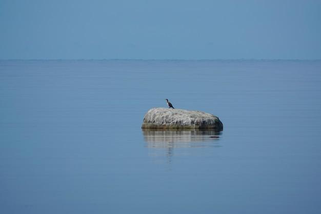 바다를 관찰하는 가마우지 - 가마우지와 샤그로 알려진 수생 조류. 영국 제도에서 흔히 볼 수 있는