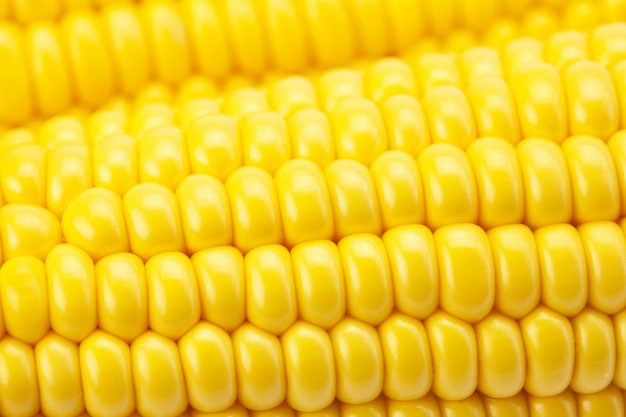 Corn cob close up