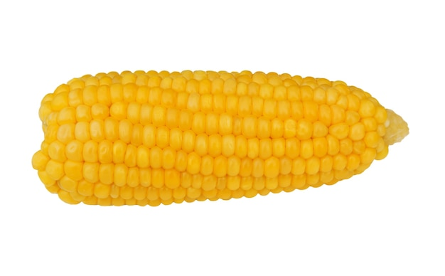 白い背景に分離されたトウモロコシの穂軸。耳。ゆでスイートコーン。