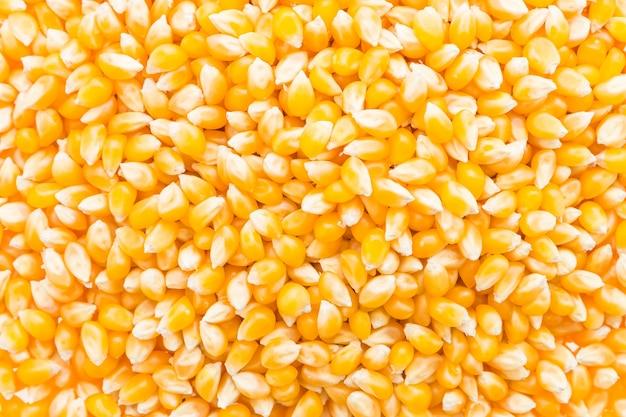 Corn cob seed