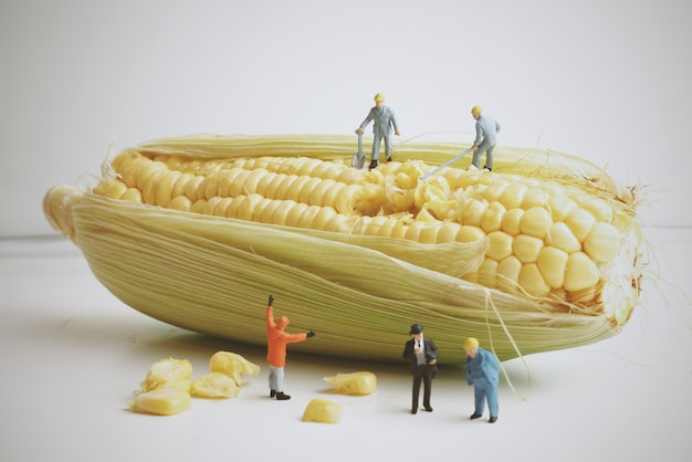 Corn cob with dolls on top