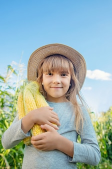 Corn on the field in the hands of a child