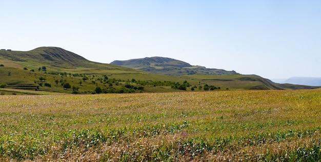 Кукурузное поле в предгорьях