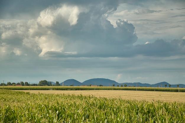 雷雨といくつかの丘を背景にしたトウモロコシ畑、イタリアのロビゴ地域の田園風景の例。