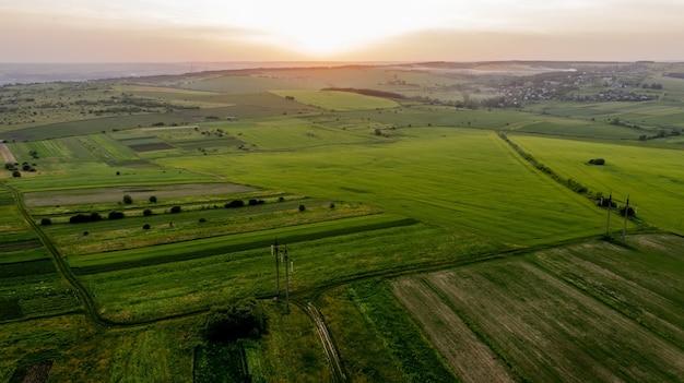 Кукурузное поле с молодыми растениями на плодородной почве на закате