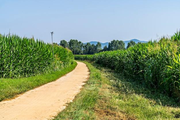 Поливают кукурузные поля на велосипедной дорожке ллагостеры.