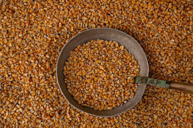 Corn kernels lie in an old iron cup, with corn kernels scattered around.
